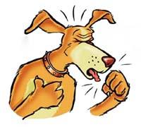 Campaña de vacunación contra la traqueobronquitis canina