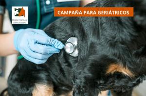 Campaña especial para mascotas mayores